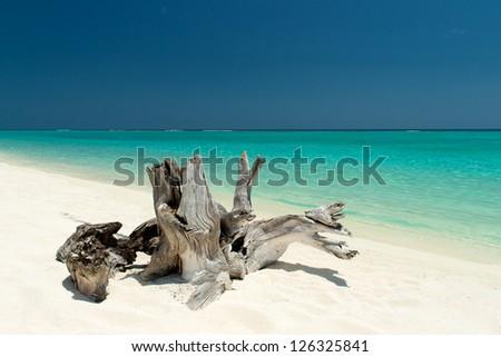 driftwood on a beautiful beach - stock photo