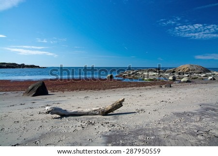 Driftwood on a sandy beach with seaweed, rocks and horizon.  - stock photo