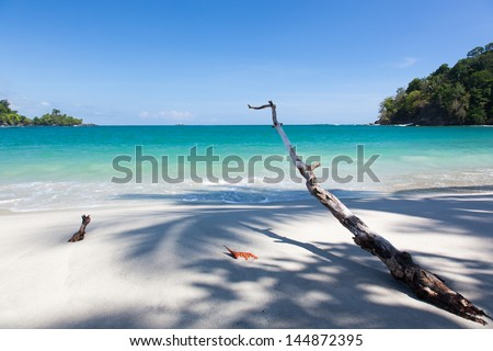 Driftwood on a tropical beach - stock photo