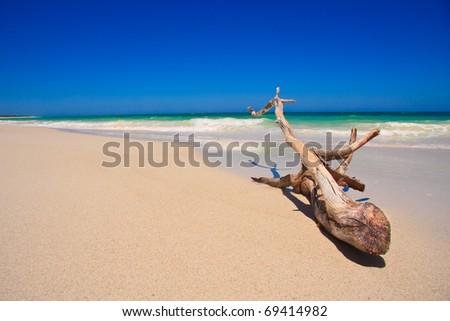 Driftwood on a tropical beach - stock photo