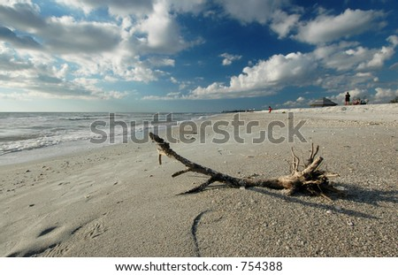 Driftwood on Florida beach - stock photo