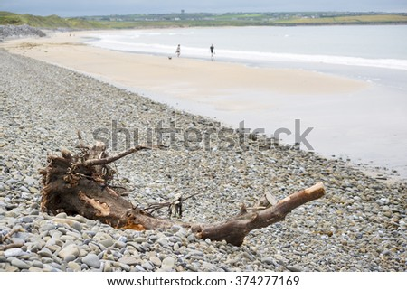 driftwood on pebbled ballybunion beach beside the links golf course in county kerry ireland - stock photo