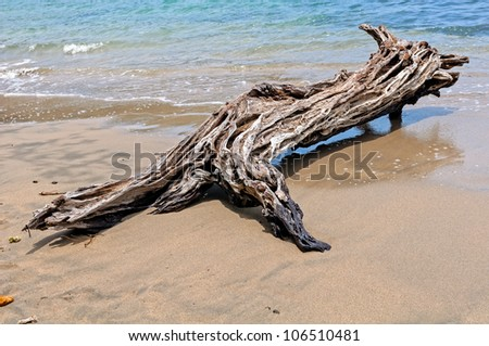 Driftwood on the beach in the shape of the wild animal - stock photo