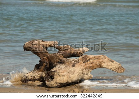 Driftwood on the ocean  beach at summertime - stock photo