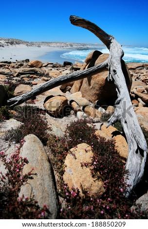 Driftwood on the Skeleton coast, Namaqualand, Northern Cape, South Africa - stock photo