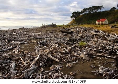 Driftwood strewn beach on North island of New Zealand - stock photo