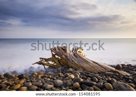 Driftwood Stuck in the Rocks - stock photo
