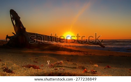 Driftwood Sunrise ~ Scottburgh, KZN, South Africa - stock photo