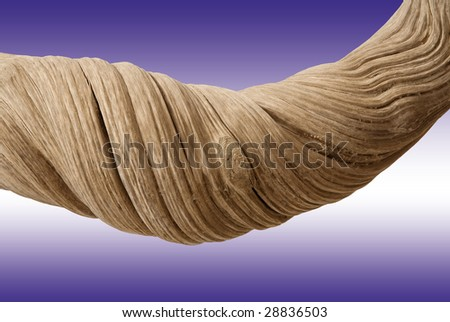 Driftwood with strong twisted grain and knots on mauve background with clipping path - stock photo