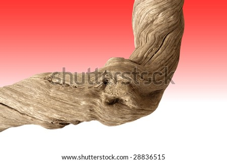 Driftwood with strong twisted grain and knots on red background with clipping path - stock photo