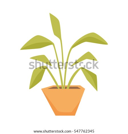 Drimiopsis, Dieffenbachia, Syngonium in pot. Interior home and office decor elements. Houseplant cartoon illustration. Flowerpot growth and gardening..