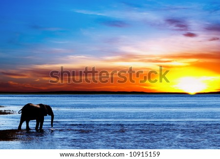 Drinking elephant silhouette - stock photo