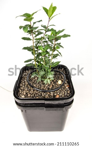 drip irrigation - stock photo