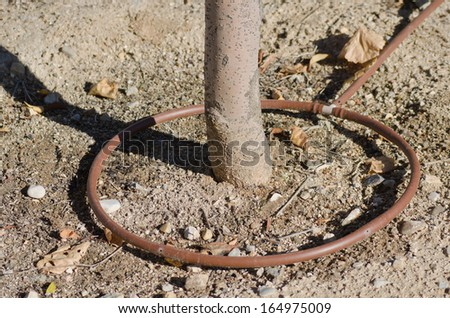 drip irrigation system for a tree - stock photo