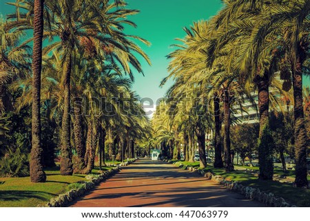 Driveway of palm trees on the Croisette in Cannes: Palm grove in Rose Garden