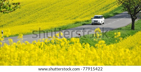 Driving car on road in yellow canola fields, panorama - stock photo
