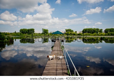 drone on the bridge with a dog breed Jack Russell terrier on a lake