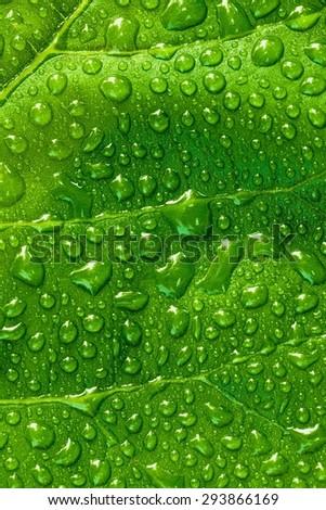 Drop, Green, waterdrops. - stock photo
