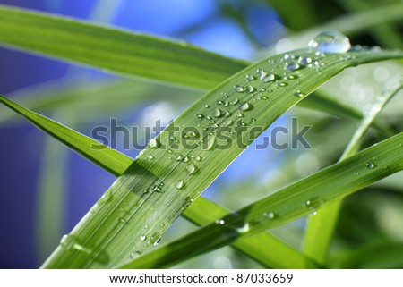 drop of dew on a blade of grass - stock photo