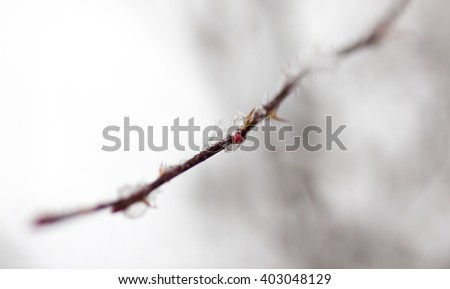 drop of water on a tree branch in the cold, close-up - stock photo