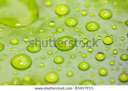 Drop of water on green leave background - stock photo