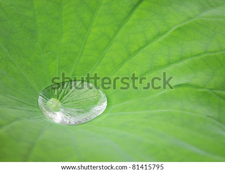 Drop of water on Lotus leaf - stock photo