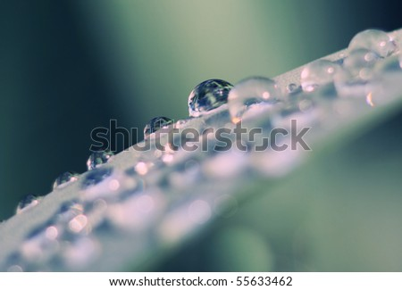 Drop of water on the blade of grass - stock photo