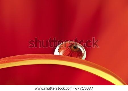 drop on flower petal - stock photo