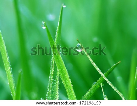 drop on grass macro close  - stock photo