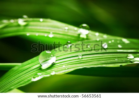 drop on grass macro close - stock photo