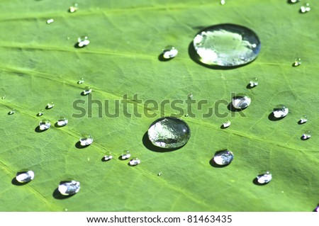 Drop on lotus leaf - stock photo
