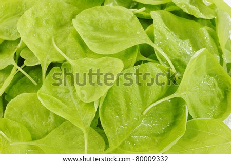 drop water on spinach