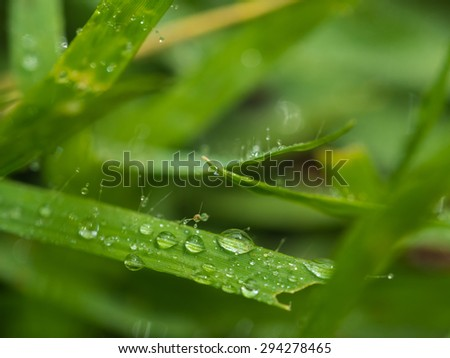 drop water on the grass