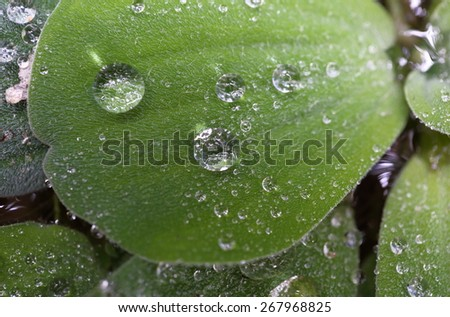 drop water plant - stock photo