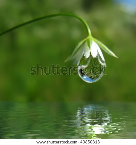 Droplet on flower - stock photo