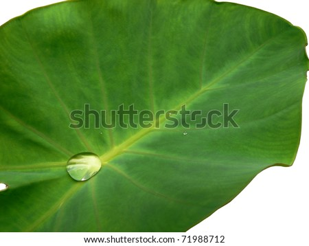 droplet on leaf isolated - stock photo