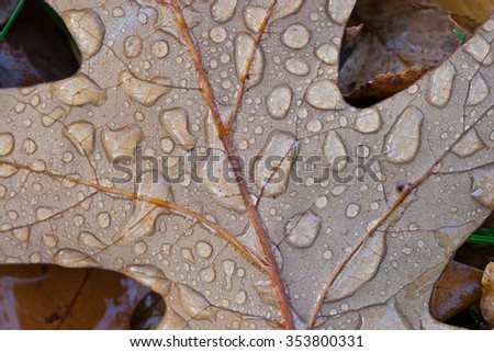Droplets of rain on a brown leaf, close-up - stock photo