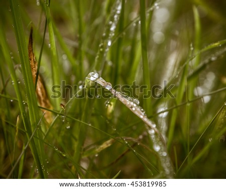 Droplets of water on grass blades in a field during a summer morning with one droplet in focus and others blurred - stock photo