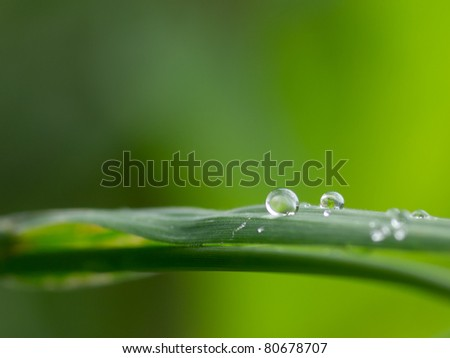 Droplets on blade of grass