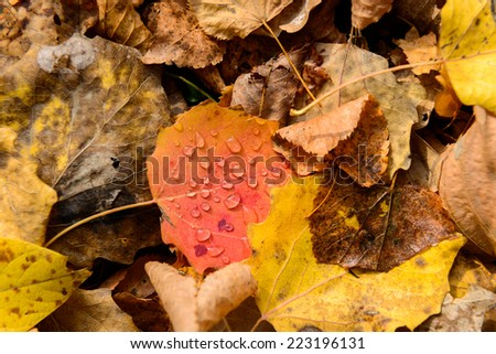 Droplets on the leaves of autumn - stock photo