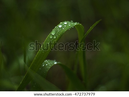 Drops of dew. magic morning. Fresh pictures. Herb. Beautiful world. Beautiful plants. Morning dew. Dew on the grass.
