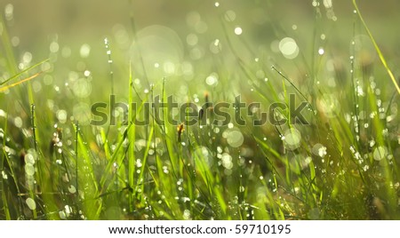 drops of dew on a grass - stock photo