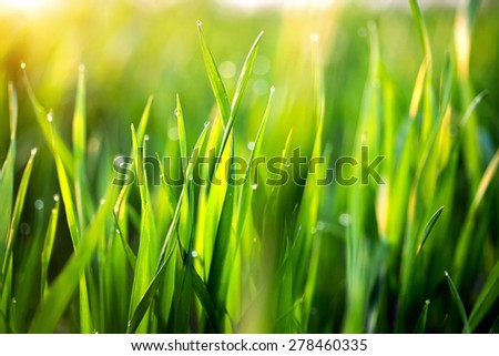 drops of dew on a green grass. - stock photo