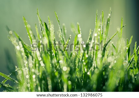 Drops of dew on a green grass (macro) - stock photo