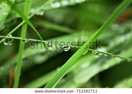 Drops of dew on a green leaf of grass.Selective focus .Macro
