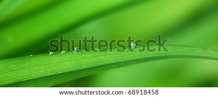 Drops of dew on bright green grass leaf - stock photo