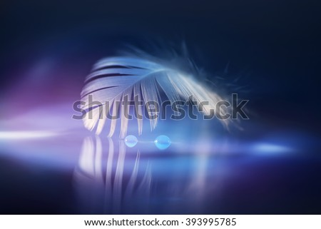drops of dew on the feather, white feather in a beautiful background - stock photo