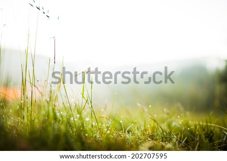 Drops of dew on the grass in the morning light - stock photo