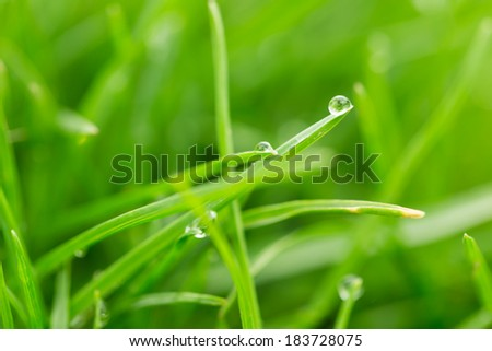 drops of dew on the grass. macro - stock photo
