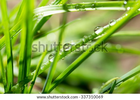 drops of dew on the green grass. close
